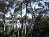 Excursió a Collserola: del Pantà de Vallvidrera a Sant Pere Màrtir