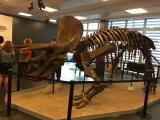 Alumnes de l'I2 de Sabadell visiten el Museu Paleontològic