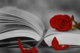 Més de 70 activitats de llengua per celebrar Sant Jordi
